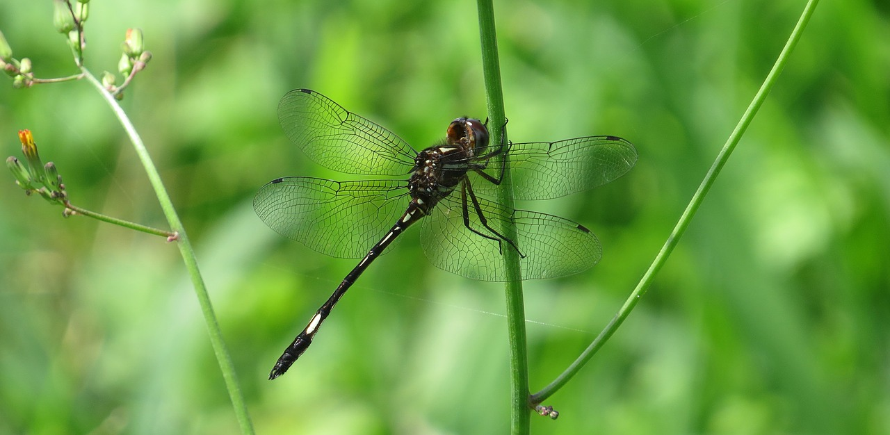 Recognizing Synchronicity – Enter the Dragonfly
