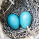 Nesting Like a Mother with Baby #2